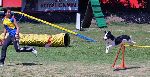 Border Collie Magazine Mayo 2011 Agility La Conducción