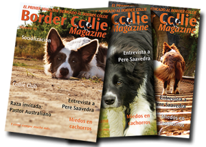 Portada Border Collie Magazine Número 10
