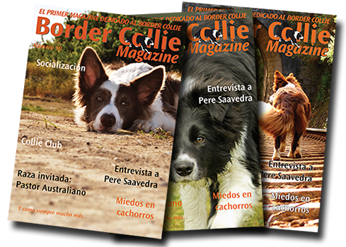 Border Collie Magazine Nº 10 Octubre 2014