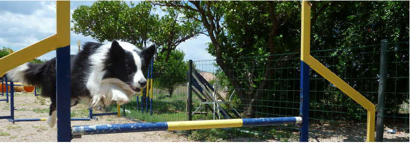 Border Collie Magazine 01 Febrero 2011 - Agility