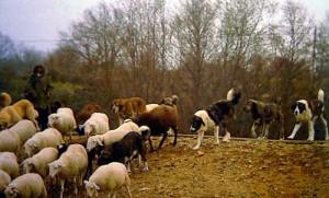 Herding Border Collie Magazine Mayo 2011