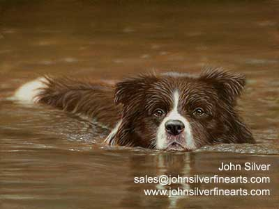 John Silver Border Collie Magazine