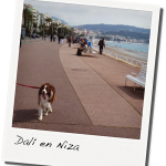 Especial Viajes Border Collie Magazine Francia
