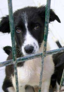 Border Collie Magazine Cachorros con miedos