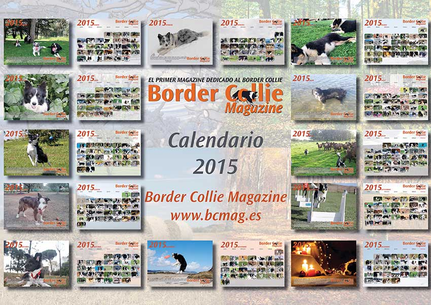 Calendario Border Collie Magazine 2015